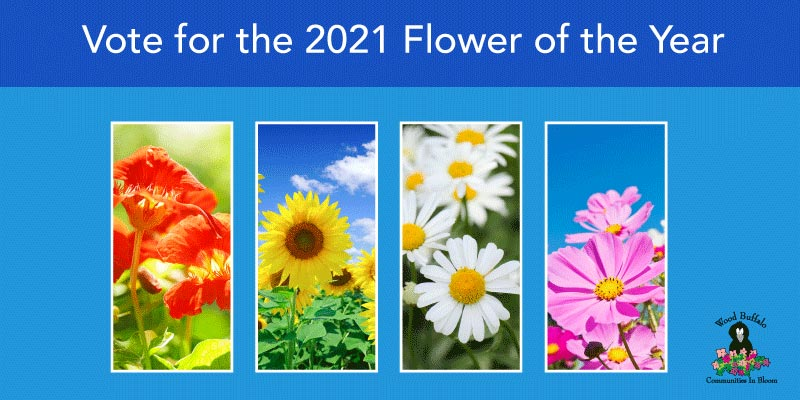 Flower of the year