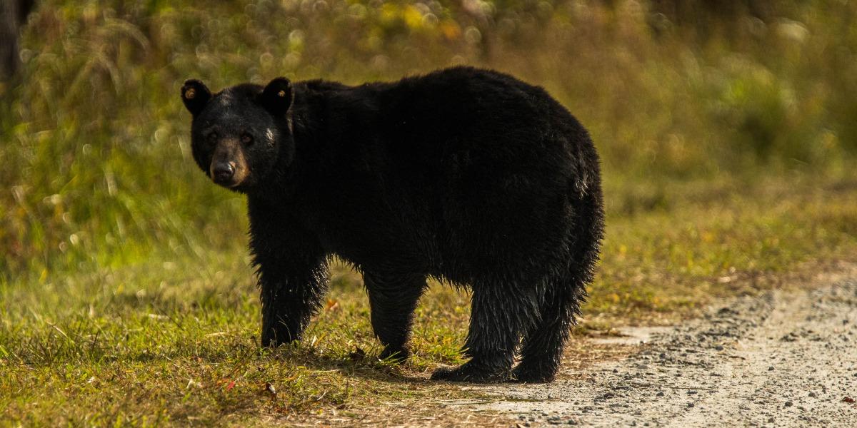 BearSmart